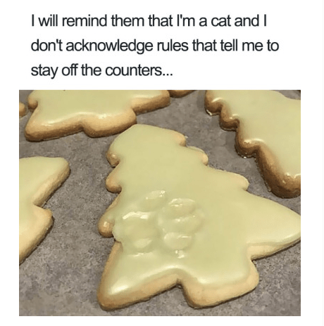 Gingerbread - I will remind them that I'm a cat and I don't acknowledge rules that tell me to stay off the counters...