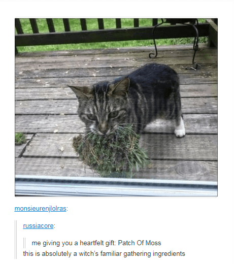 tabby cat holding moss in its mouth me giving you a heartfelt gift: Patch Of Moss this is absolutely a witch's familiar gathering ingredients