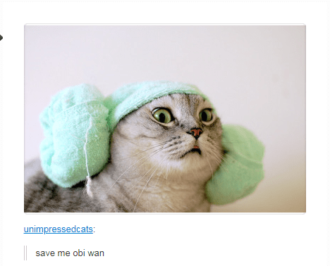 cat wearing green thing on head save me obi wan