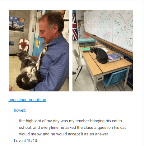 teacher holding cat in classroom the highlight of my day was my teacher bringing his cat to school, and everytime he asked the class a question his cat would meow and he would accept it as an answe Love it 10/10
