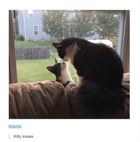 cats sitting by the window touching noses Kitty kisses
