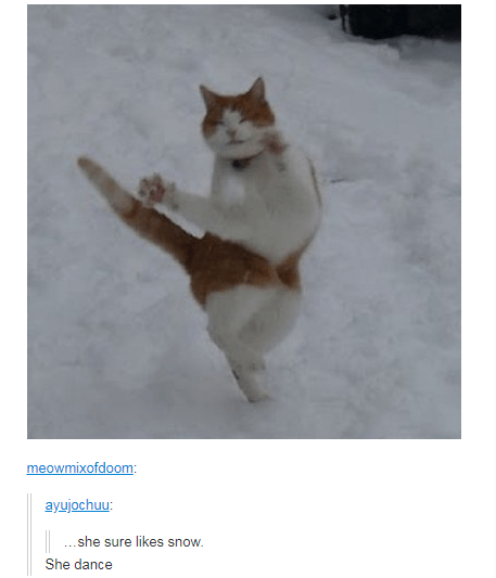 black and white cat dancing she sure likes snow. She dance