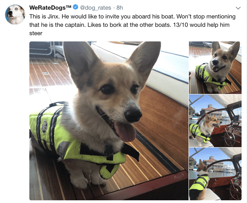 Mammal - WeRateDogs TM @dog_rates 8h This is Jinx. He would like to invite you aboard his boat. Won't stop mentioning that he is the captain. Likes to bork at the other boats. 13/10 would help him steer