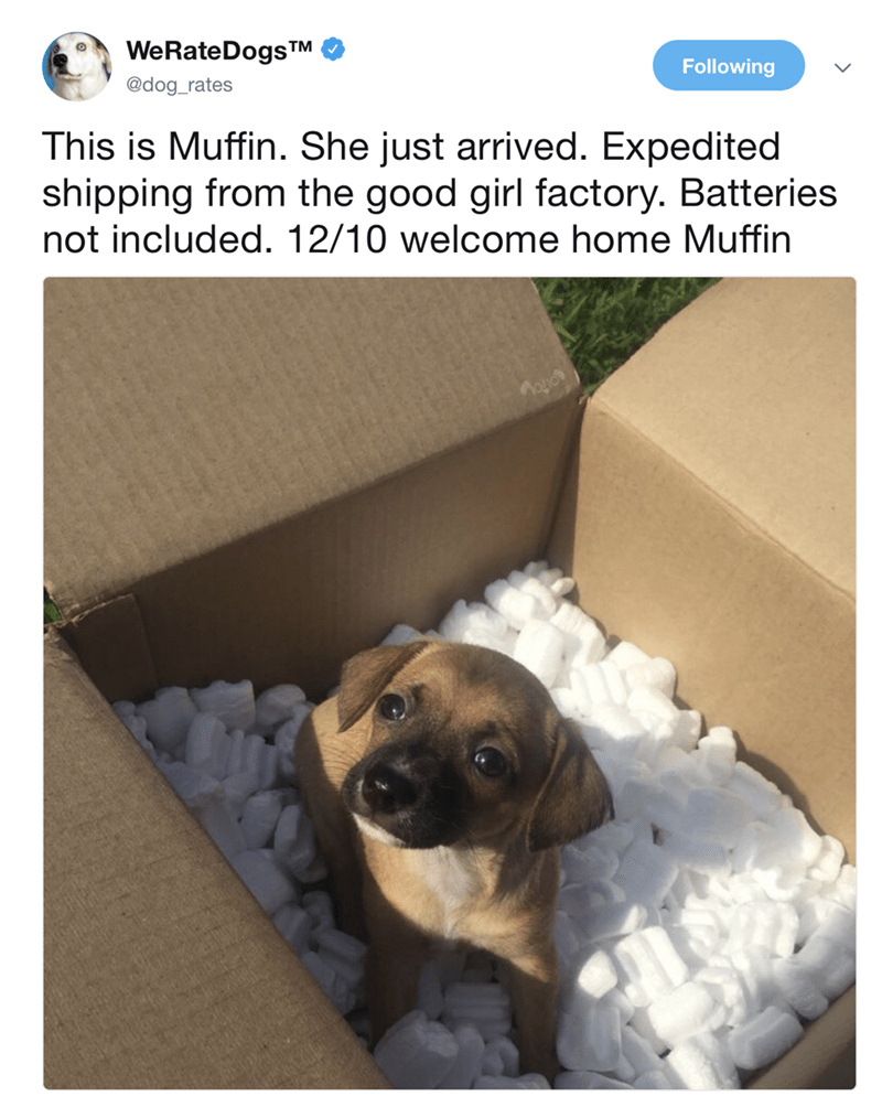 Dog - WeRateDogsTM Following @dog_rates This is Muffin. She just arrived. Expedited shipping from the good girl factory. Batteries not included. 12/10 welcome home Muffin