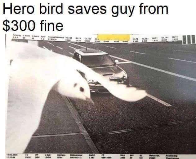 Text - Hero bird saves guy from $300 fine LT OLt ta 344