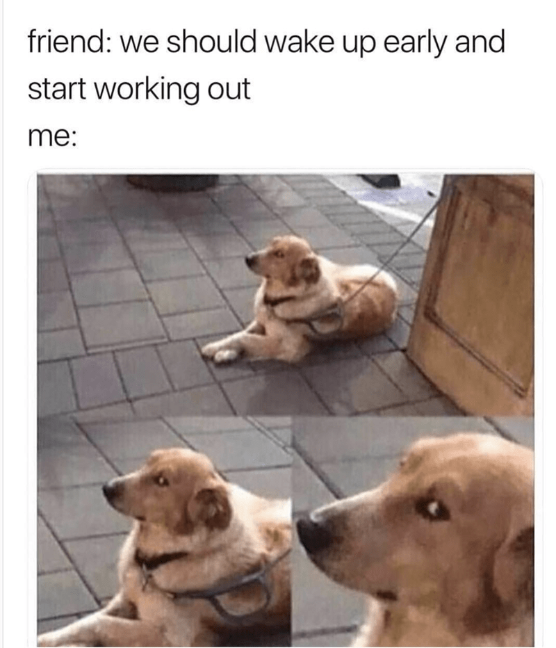 """Caption that reads, """"Friend: We should wake up early and start working out; Me: ..."""" above a pic of a dog giving the camera the side-eye"""