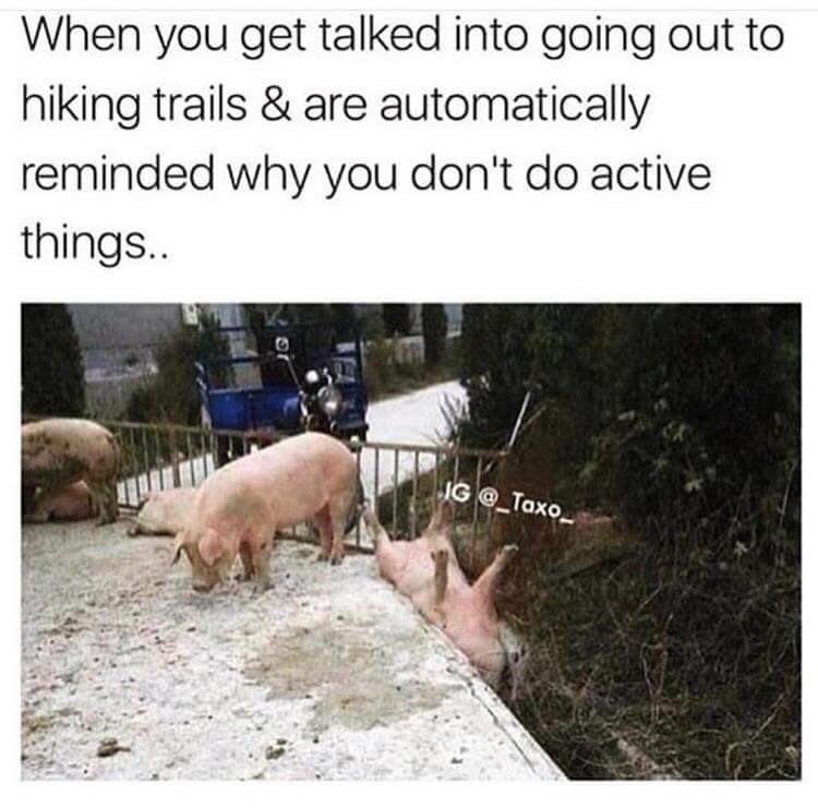 Friday meme about hating being active with pic of pig stuck in a ditch