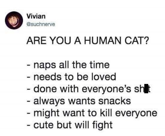 Friday meme with tweet listing requirements for being a cat