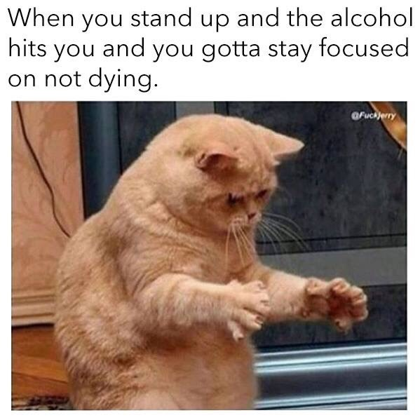 "Caption that reads, ""When you stand up and the alcohol hits you and you gotta stay focused on not dying"" above a pic of an orange cat appearing to be trying to balance"