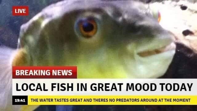 Fish - breat LIVE BREAKING NEWS LOCAL FISH IN GREAT MOOD TODAY 19:41 THE WATER TASTES GREAT AND THERES NO PREDATORS AROUND AT THE MOMENT