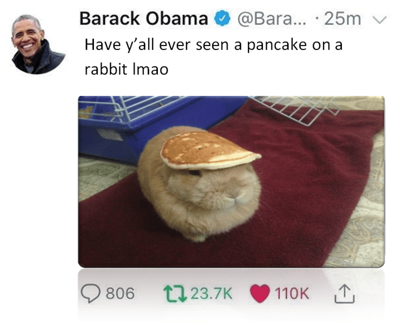 """Fake Barack Obama tweet that reads, """"Have y'all ever seen a pancake on a rabbit LMAO"""" above a pic of a rabbit with a pancake on its head"""