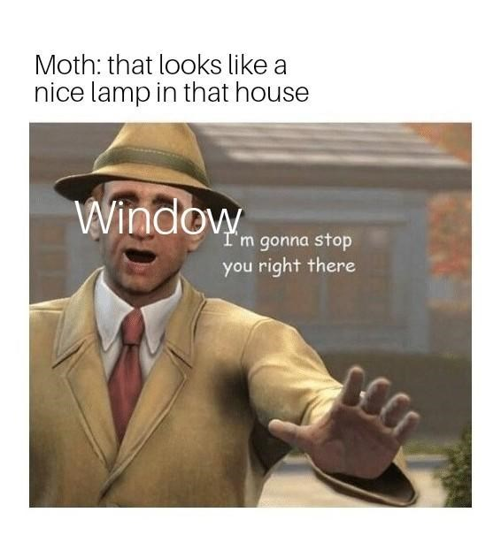 meme about window stopping moth from going into house for lamp
