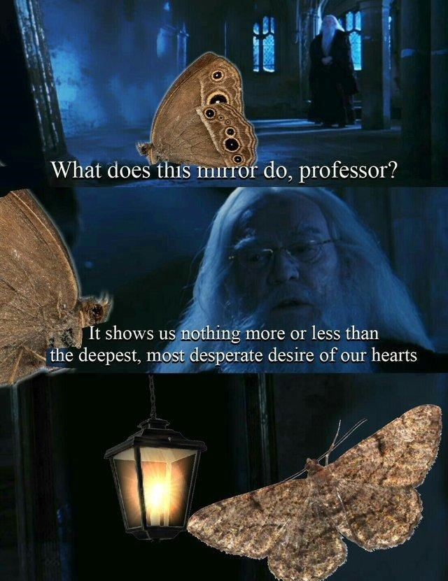 moth looking into the Mirror of Erised from Harry Potter and seeing lamp