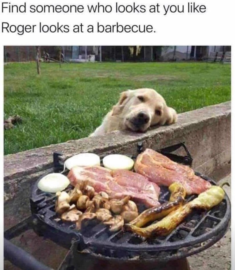 meme - Canidae - Find someone who looks at you like Roger looks at a barbecue.