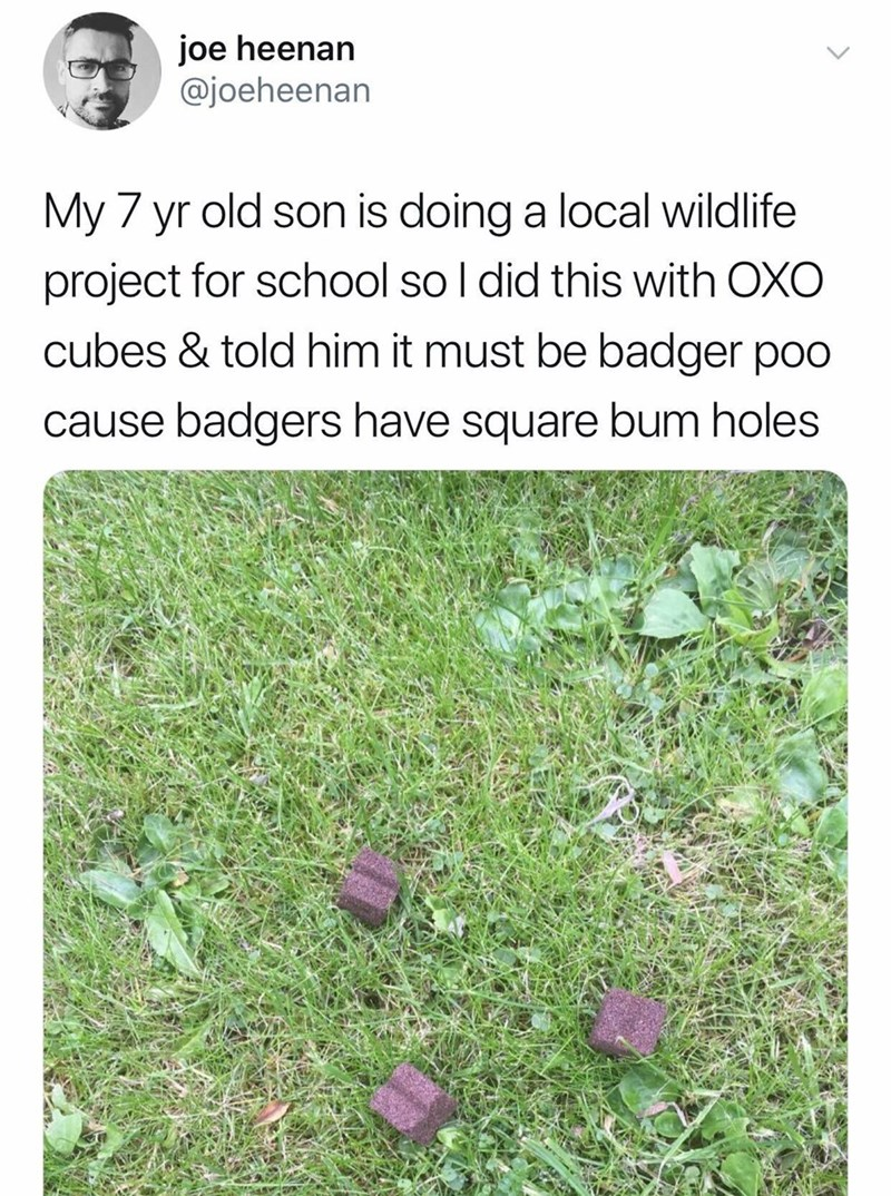 meme - Text - joe heenan @joeheenan My 7 yr old son is doing a local wildlife project for school so I did this with OXO cubes & told him it must be badger poo cause badgers have square bum holes