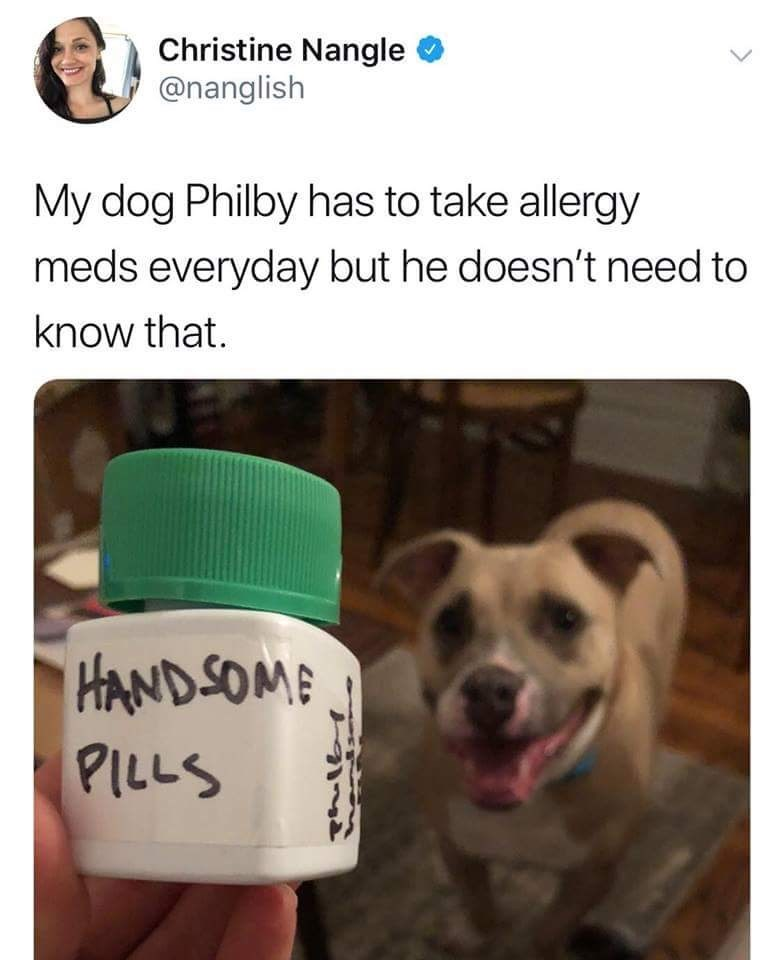 meme - Product - Christine Nangle @nanglish My dog Philby has to take allergy meds everyday but he doesn't need to know that. HAND SOME PILLS