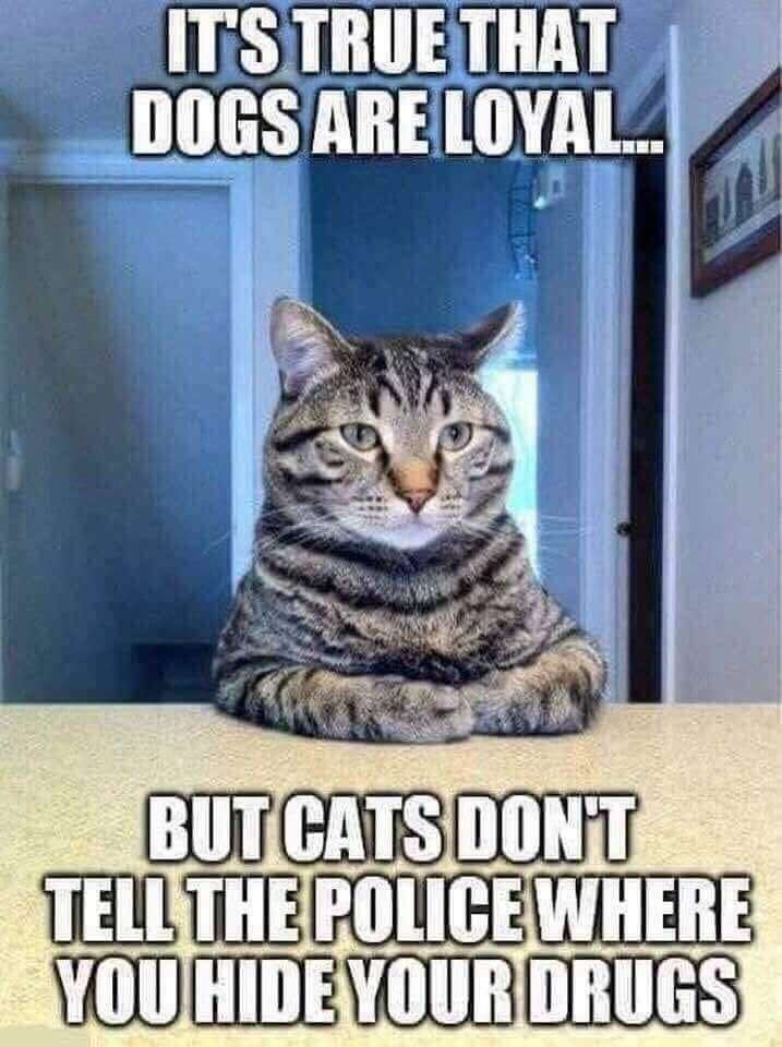 meme - Cat - ITSTRUE THAT DOGS ARE LOYAL BUT CATS DONT TELL THE POLICE WHERE YOUHIDEYOURDRUGS