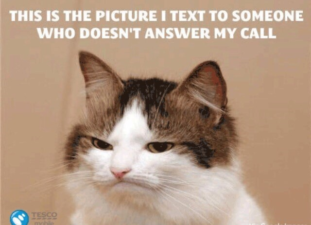 """Caption that reads, """"This is the picture I text to someone who doesn't answer my call"""" above a pic of an angry cat"""
