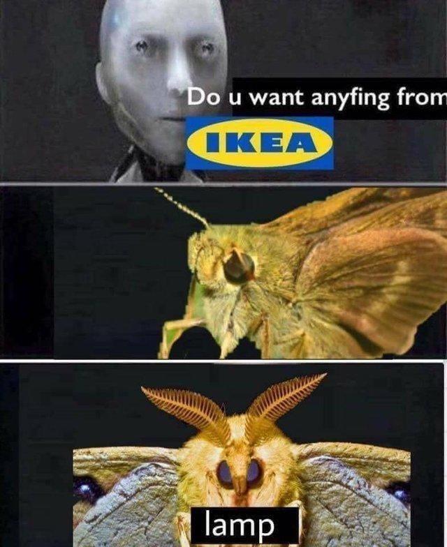 reddit memes - Moth - Do u want anyfing from IKEA lamp