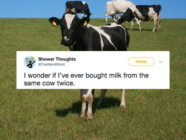 Dairy cow - Shower Thoughts eTheWeirdWorld Follow I wonder if I've ever bought milk from the same cow twice.