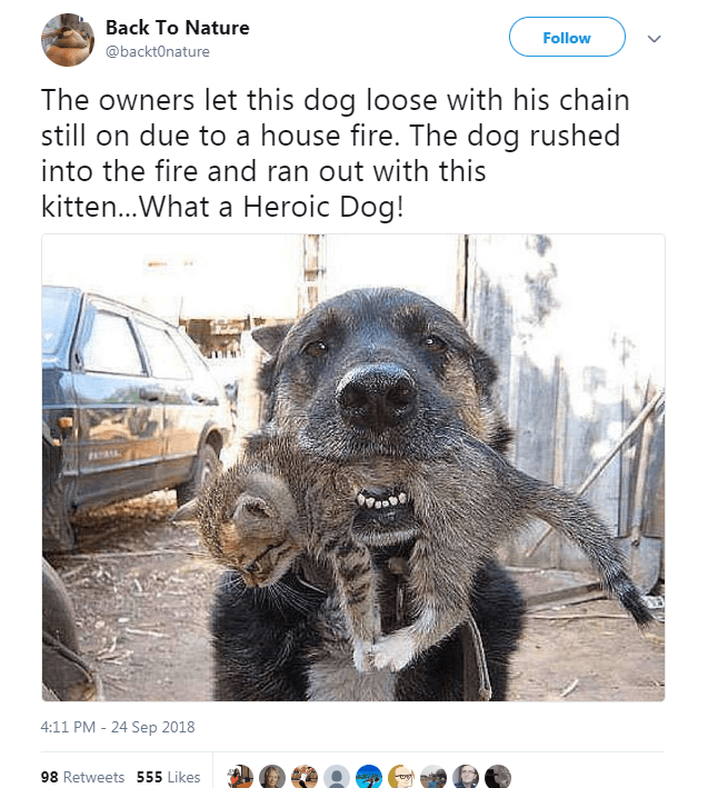 Canidae - Back To Nature Follow @backtOnature The owners let this dog loose with his chain still on due to a house fire. The dog rushed into the fire and ran out with this kitten...What a Heroic Dog! 4:11 PM 24 Sep 2018 98 Retweets 555 Likes