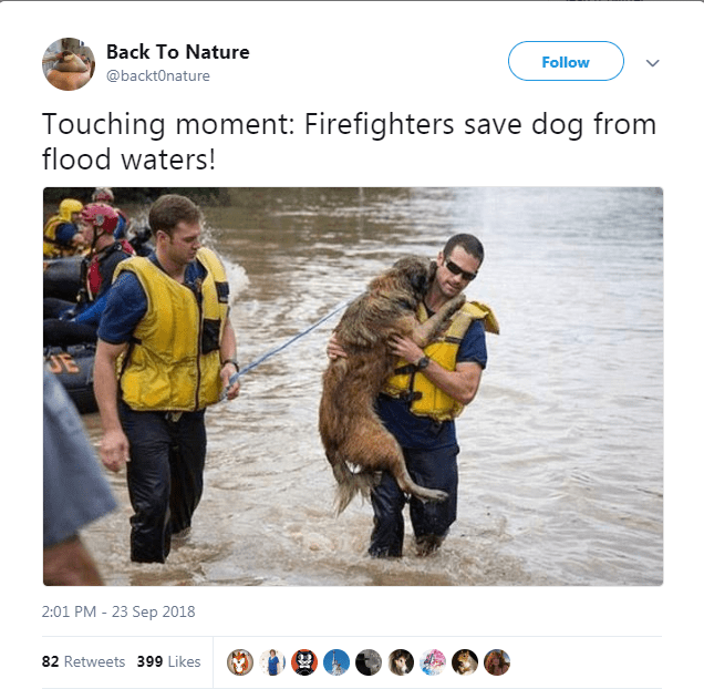 Lifejacket - Back To Nature Follow @backtOnature Touching moment: Firefighters save dog from flood waters! 2:01 PM 23 Sep 2018 82 Retweets 399 Likes