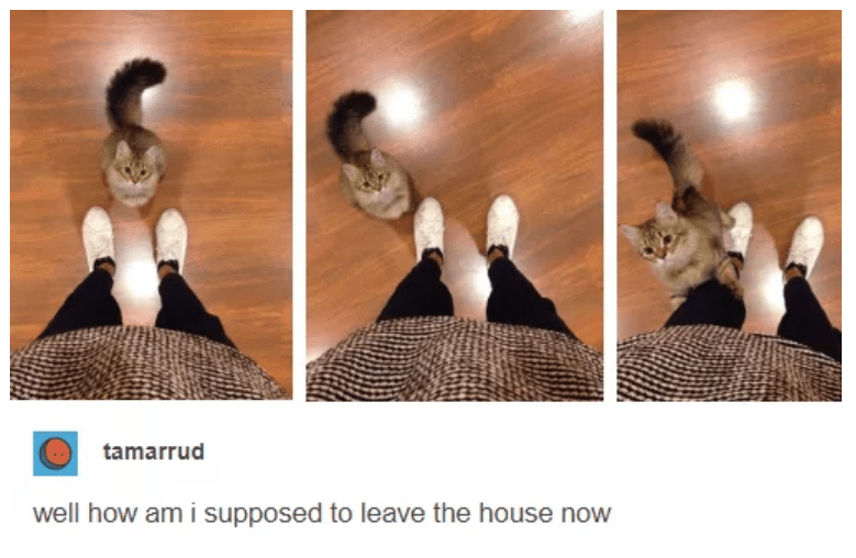 Human - tamarrud well how am i supposed to leave the house now