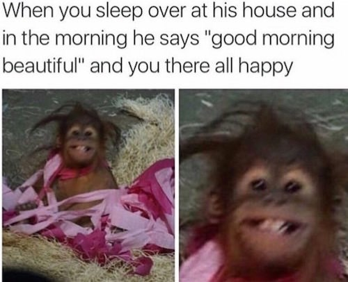 meme about being called beautiful in the morning despite looking like a monkey