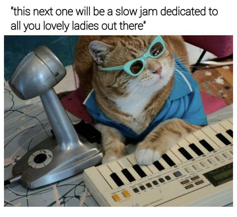 meme about romantic cat musician with picture of cat in sunglasses playing keyboard