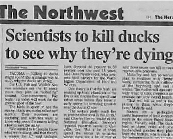 Newspaper - The Northwest CH The Hera Scientists to kill ducks to see why they're dying have doed l pent to d e uae can Tom proolans MAayad et oe an tHenns omarg ta naiee Veinng The wia wide rge of aic chs nhedvedl heat The wi dac d D Nyeadr, Mo dsves TACOMA u mig ount tharabge way t y why du Di ah and We Ser the p mesey plnn ing apaind Oane gtnnng dy wewrs the PCter gat of the foe The es in etun are the hiark es ducks ret sur M Thir hers a cectane utia i the nd ia w ta . eaty png beding ootd he