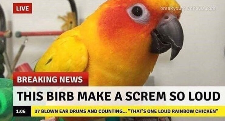"Fake news headline that reads, ""This birb make a screm so loud"""