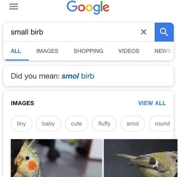 """Someone googled """"small birb"""" and Google corrected to , """"Did you mean: smol birb"""""""