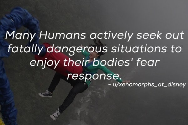 Text - Many Humans actively seek out fatally dangerous situations to enjoy their bodies' fear response -u/xenomorphs_at_disney