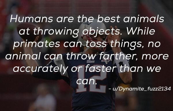 Text - Humans are the best animals at throwing objects. While primates can toss things, animal can throw farther, more no accurately or faster than we can. u/Dynamitefuzz2134