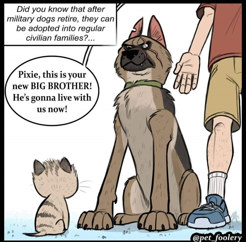 Pixie and Brutus meme of military dog retiring to live with family that has a cat