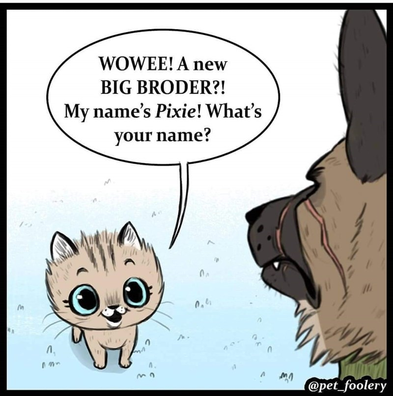 Pixie introducing herself, asking Brutus his name