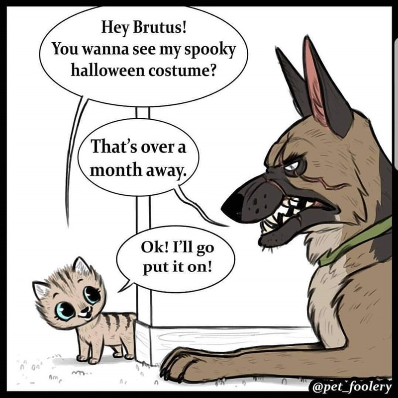 Pixie offering Brutus to show him the Halloween costume