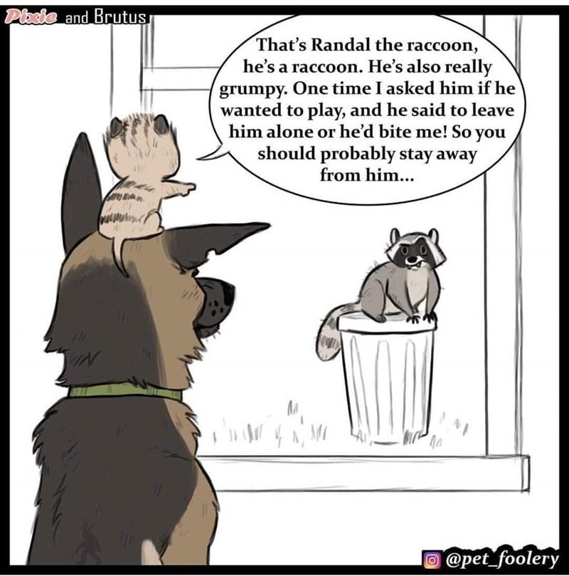 Pixie telling Brutus