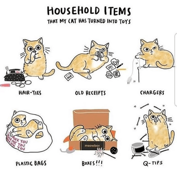 Cartoon - HOUSEHOLD ITEMS THAT MY CAT HAS TURNED INTO TOYS CHARGERS OLD RECEIPTS HAIR-TIES in NK YOU You ANK YOU meowbox Q-TIPS BOXES!! PLASTIC BAGS