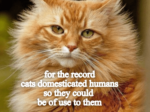 Cat - for the record cats domesticated humans so they could be of use to them