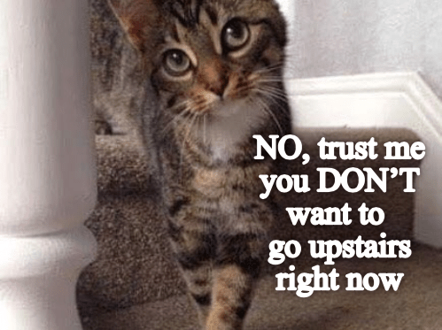 Cat - NO, trust me you DON'T want to go upstairs right now