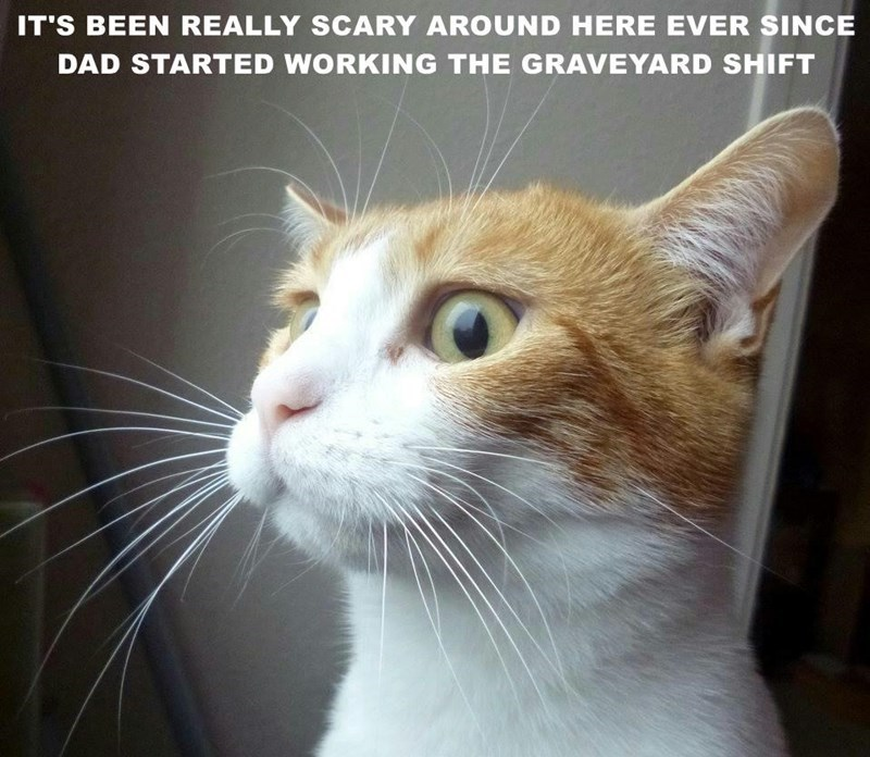 Cat - IT'S BEEN REALLY SCARY AROUND HERE EVER SINCE DAD STARTED WORKING THE GRAVEYARD SHIFT