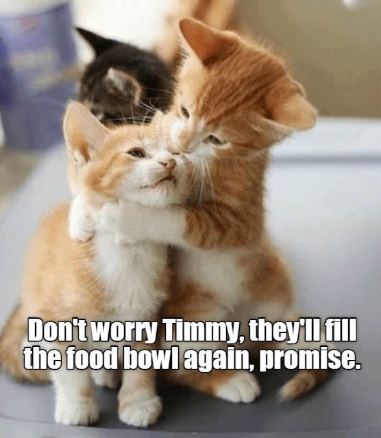 Cat - Dontworry Timmy, they ll fill the food bowl again, promise.