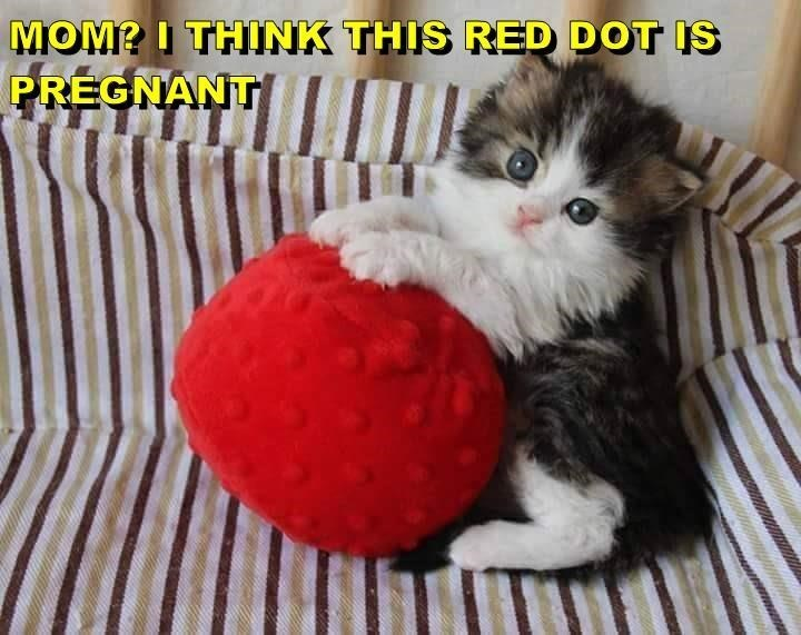 Cat - MOMP I THINK THIS RED DOT IS PREGNANT