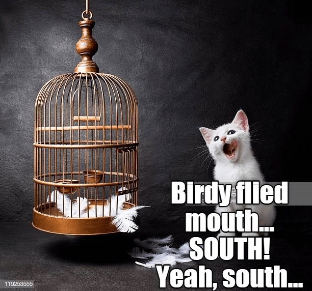 Cage - Birdy flied mout.. SOUTH! Yeah, south... 119253555