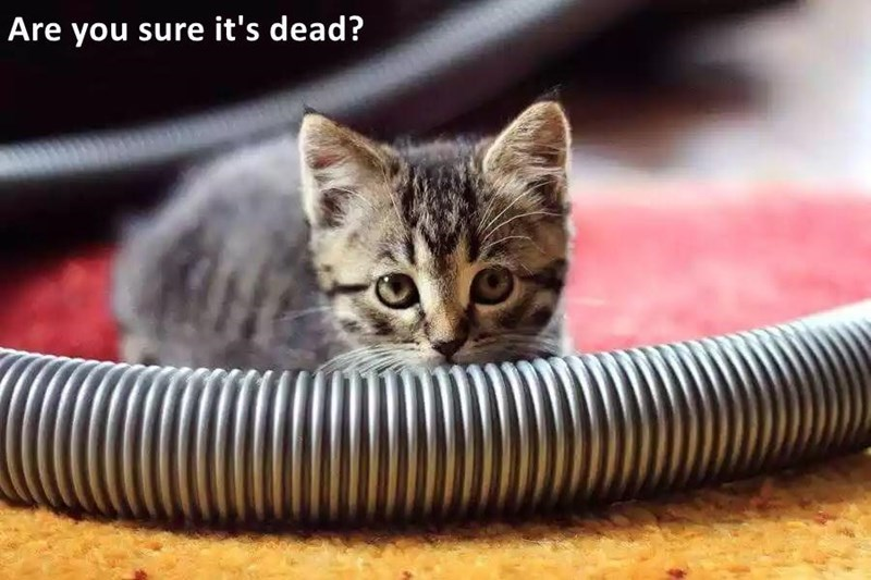 Cat - Are you sure it's dead?