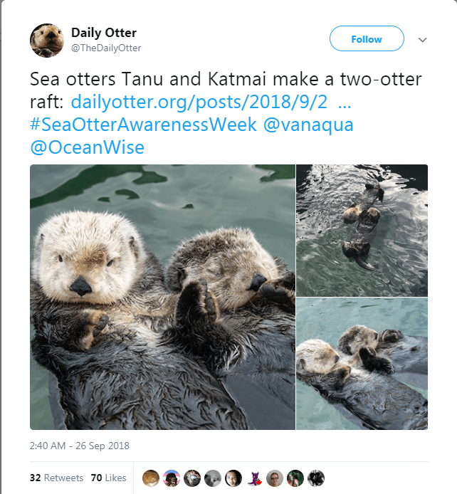 Otter - Daily Otter @TheDailyOtter Follow Sea otters Tanu and Katmai make a two-otter raft: dailyotter.org/posts/2018/9/2 #SeaOtterAwarenessWeek @vanaqua @OceanWise 2:40 AM - 26 Sep 2018 32 Retweets 70 Likes