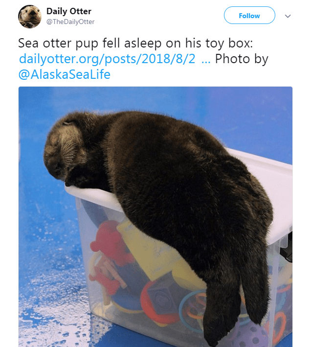 Wildlife - Daily Otter @TheDailyOtter Follow Sea otter pup fell asleep on his toy box: dailyotter.org/posts/2018/8/2 ... Photo by @AlaskaSeaLife