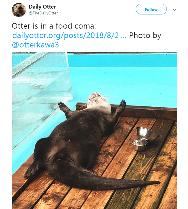 Sea otter - Daily Otter @TheDailyOtter Follow Otter is in a food coma: dailyotter.org/posts/2018/8/2 ... Photo by @otterkawa3