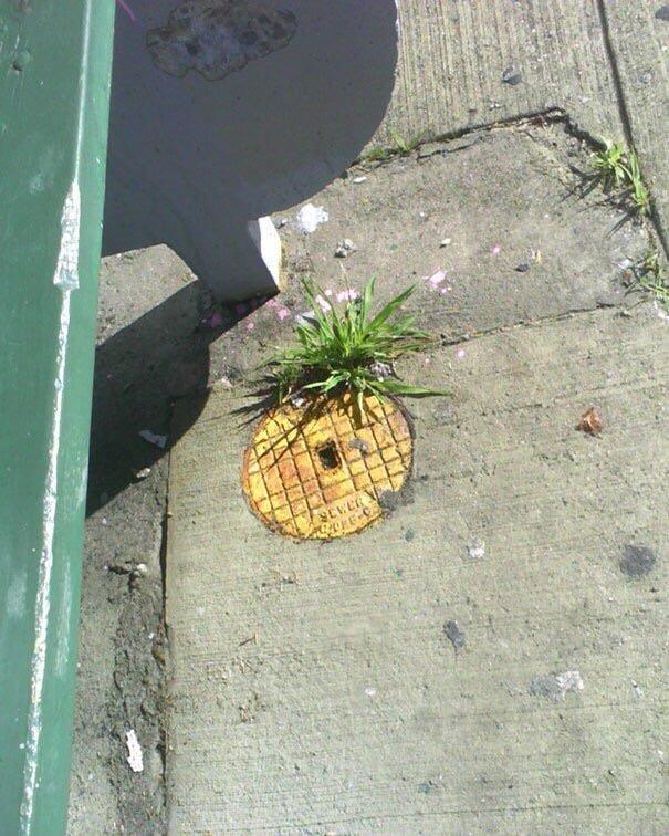 Ananas - OPE